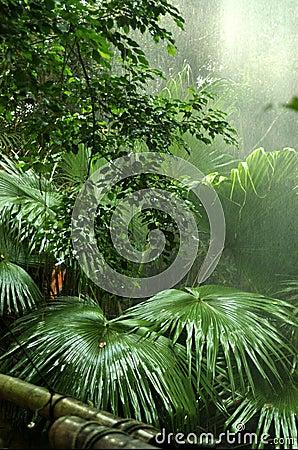 Free Rainforest Royalty Free Stock Photo - 3598975