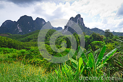 Rainforest Av Den Khao Sok Nationalparken Arkivfoto - Bild: 27945820