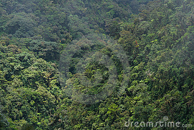 Rainforest in Bolivian Andes, Yungas