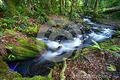 Rainforest Creek