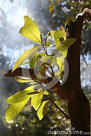 Rainforest Growth