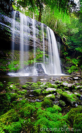 Free Rainforest Heaven Stock Images - 12222704