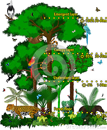 Free Rainforest Jungle Layers Vector Illustration. Vector Green Tropical Forest Jungle With Different Animals. Royalty Free Stock Photography - 87902247
