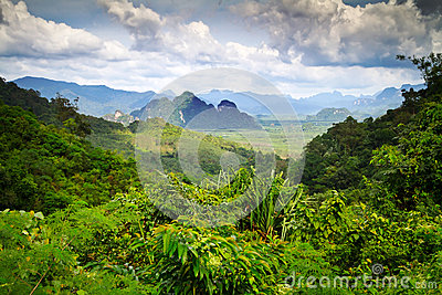 Rainforest of Khao Sok National Park