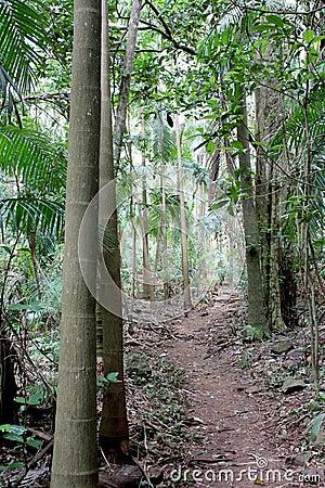Rainforest Path 8