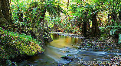 Rainforest River Panorama