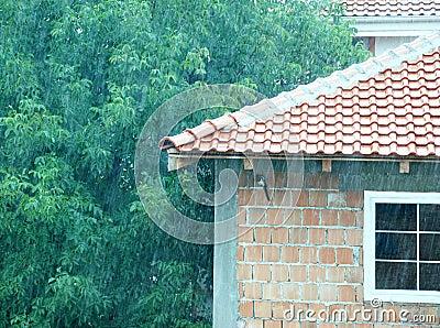 Rainy day and hiding bird