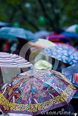 Rainy day umbrellas
