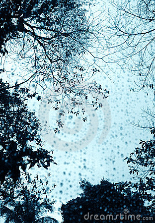 Rainy day window & trees