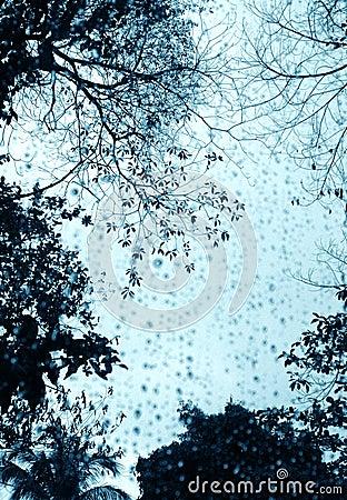 Rainy day window & trees