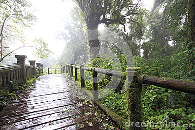 Rainy track in the mountain