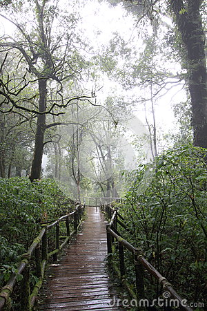 Rainy walking path