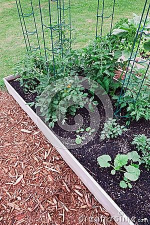Raised Garden Tomatoes