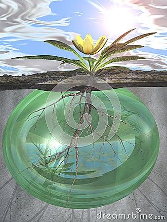 Raizes e crescimento-- Força verde da vida