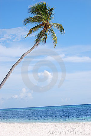 Raju palmowy drzewo