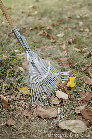 Rake with leaves