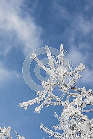 Rama cubierta con hielo en luz del sol