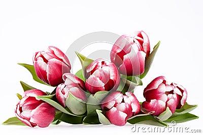 Resultado de imagem para ramalhetes de flores