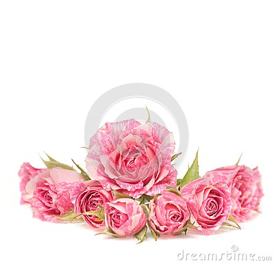 Ramalhete de flores bonitas no fundo branco.