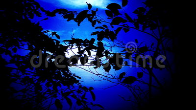Ramas de árbol en Front Of Night Sky almacen de metraje de vídeo