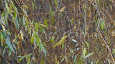 Ramas de árboles silvestres oscilando en el viento metrajes