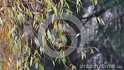Ramas de árboles silvestres oscilando en el viento a finales del otoño almacen de video