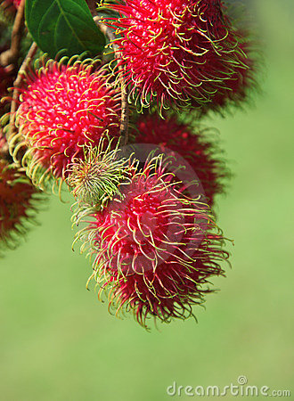 Free Rambutans Fruit Stock Photo - 13301510