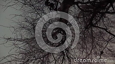 rami di albero nella nebbia stock footage