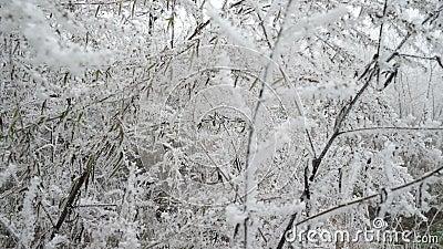 Ramificaciones blancas congeladas Paisaje del bosque metrajes