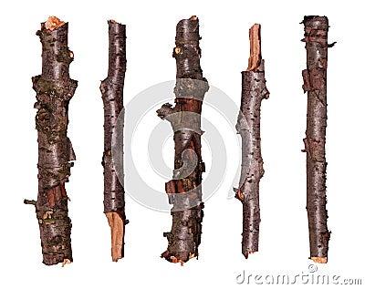 Ramificaciones de árbol