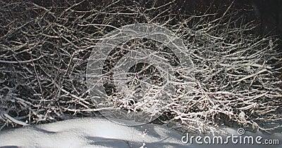 Ramificaciones de árbol cubiertas con nieve almacen de video