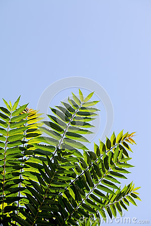 Ramifichi con le foglie verdi
