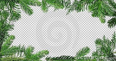 Ramka zielonej gałęzi drzewa sosnowego wyizolowana na czarnym i czerwonym ekranie tła zdjęcie wideo