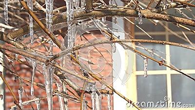 Ramo de árvore congelado no inverno vídeos de arquivo