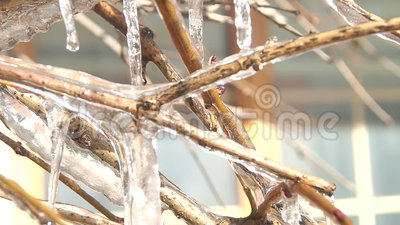 Ramo de árvore congelado no inverno filme