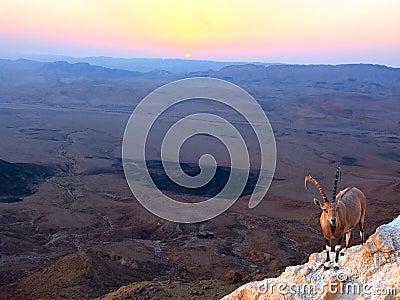 Ramon Crater  sunrise