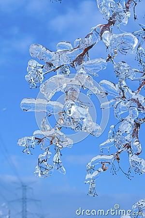 Ramos cobertos com o gelo