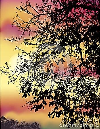 Ramos da castanha do outono