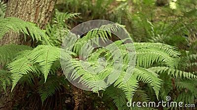 Ramos de Fern na floresta selvagem filme