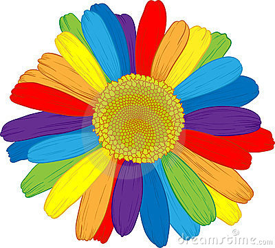 Ranbow daisy.