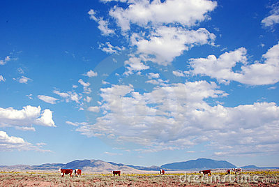 Ranch de bétail