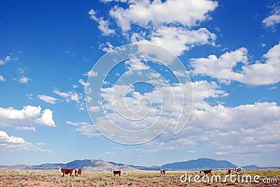 Ranch di bestiame