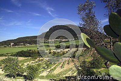 Randa Valley, Majorca, Spain