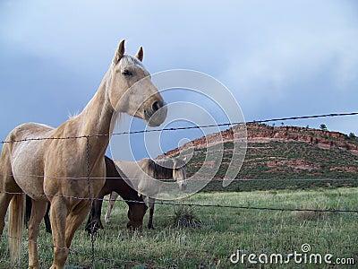 Range horses of Colorado