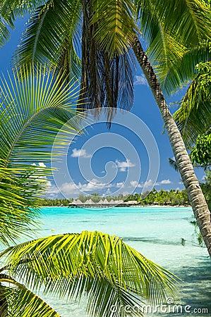 Free Rangiroa Atoll, French Polynesia Royalty Free Stock Photo - 63791975