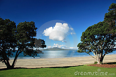 Rangitoto island through tree