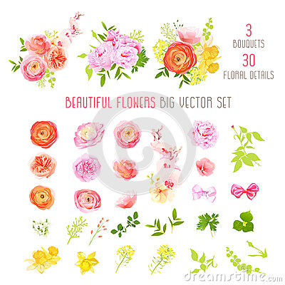 Free Ranunculus, Rose, Peony, Narcissus, Orchid Flowers And Decorative Plants Big Vector Collection Stock Photos - 68206593