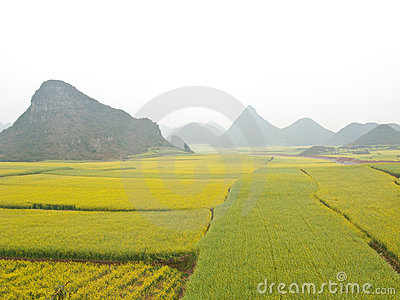 Rape Field Stock Image - Image: 13273911