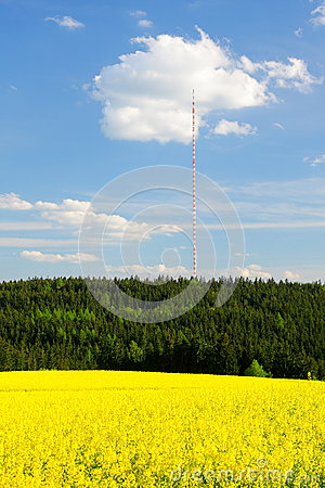 Rape field and transmission tower