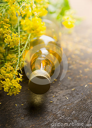 Free Rapeseed Oil With Fresh Rape Plant Stock Image - 54443501